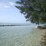 sekeliling pantai cemara besar yang penuh pohon cemara