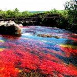 Sungai Yang Mengalir Dari Surga (Sungai Cano Cristales)