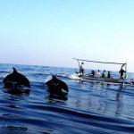 Menilik Eksotisme Pasir Dan Cerianya Tarian Lumba-lumba di Pantai Lovina