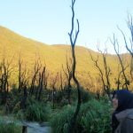 Padang edelweiss gunung papndayan