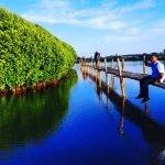 Hijau dan Romantis, Kata Yang Tepat Untuk Hutan Mangrove Kulon Progo