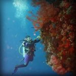 Keindahan Taman Laut Alor By zizuzan
