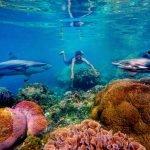 Taman Laut Selat Pantar Alor, Salah Satu Taman Laut Terindah Di Indonesia By gungafif