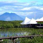 Fasilitas Hutan Bee Jay Bakau Resort
