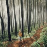 Keindahan Hutan Pinus Imogiri