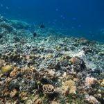 Pulau Moyo, Surga Mungil Dari Sumbawa