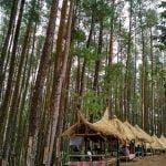 Hutan Pinus Nongko Ijo, Image By IG : @amooreamadiun