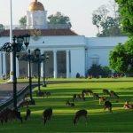 Wisata Memberi Makan Rusa di Istana Bogor, Image By IG : @seasiaig