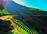Terasering Panyaweuyan Argapura, Image By IG : @rikza_zainul_umam