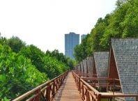 Hutan Mangrove PIK Jakarta, Image By IG : @liannali28